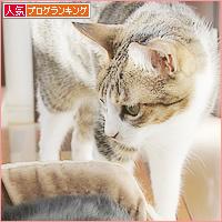猫カフェ、プレオープン_a0389088_05071099.jpg
