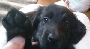 犬は大らかに育てよう!⑥_b0084194_19565758.jpg