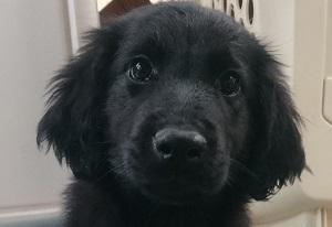 犬は大らかに育てよう!⑥_b0084194_19573062.jpg