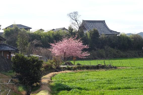 日に日に春が_b0145296_12492639.jpg