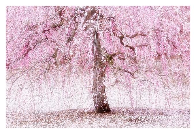 春の嵐_b0190100_02002787.jpg