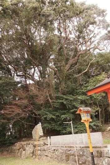愛媛県のハナガガシ_d0272107_16362484.jpg