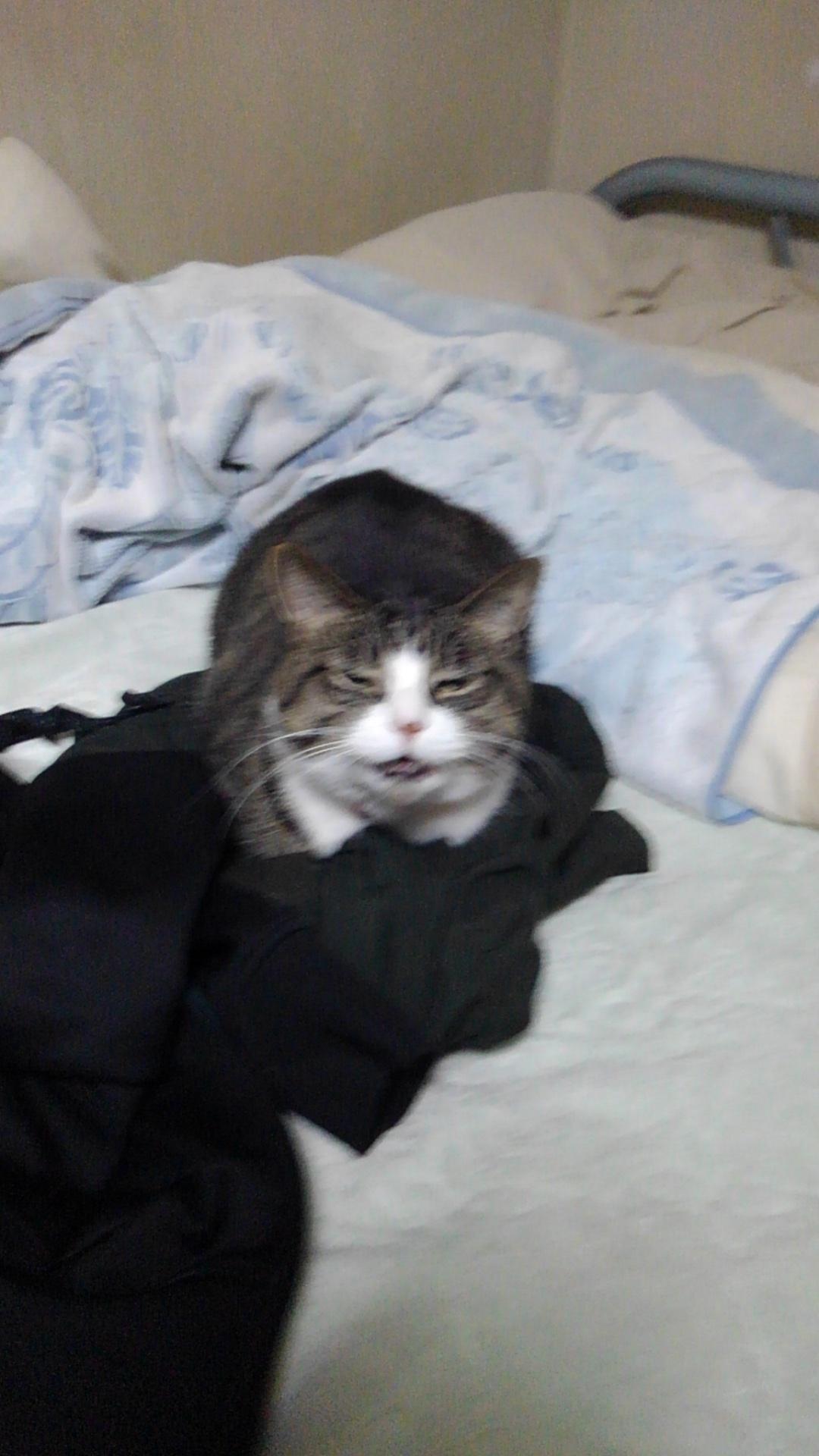 【猫】堂々と…_f0141609_18030146.jpg