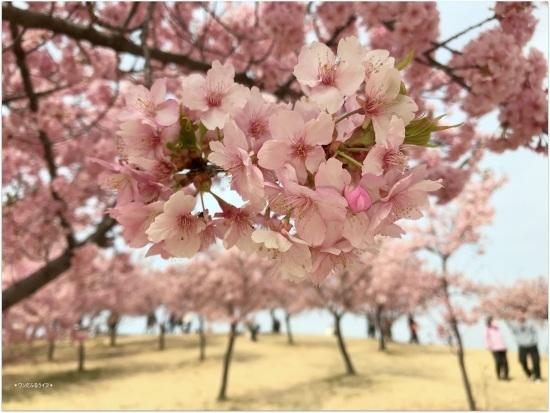 * 公園でびゅ~🎶 *_d0317115_20465874.jpg