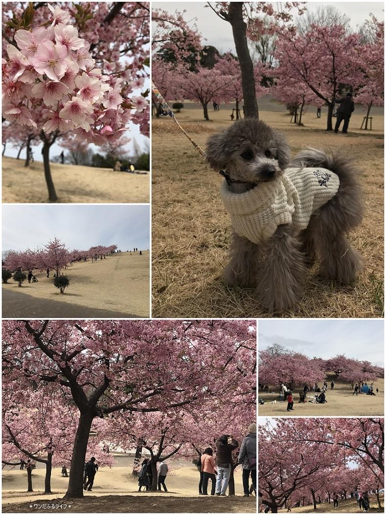 * 公園でびゅ~🎶 *_d0317115_20481855.jpg