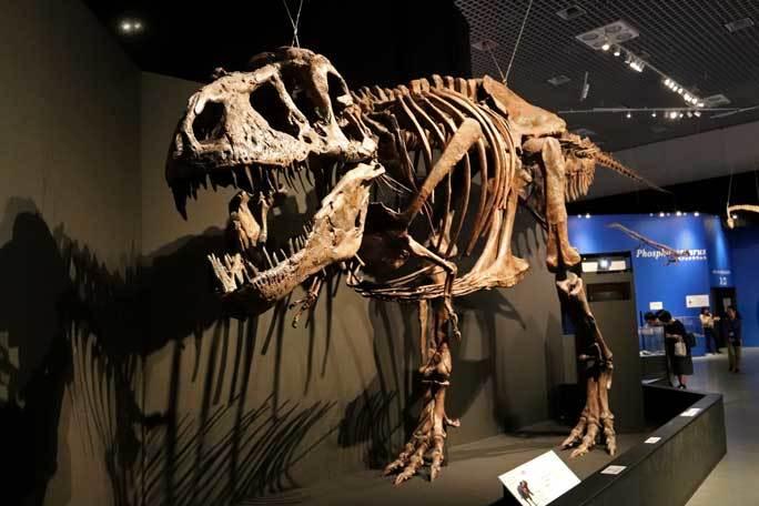 恐竜博2019~ティラノサウルス「スコッティ」とK/Pg境界_b0355317_18530145.jpg