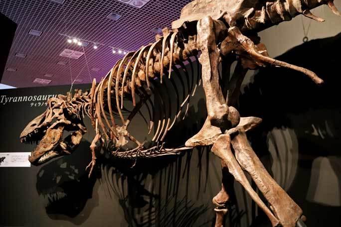 恐竜博2019~ティラノサウルス「スコッティ」とK/Pg境界_b0355317_18550309.jpg