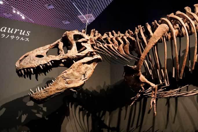 恐竜博2019~ティラノサウルス「スコッティ」とK/Pg境界_b0355317_18565562.jpg
