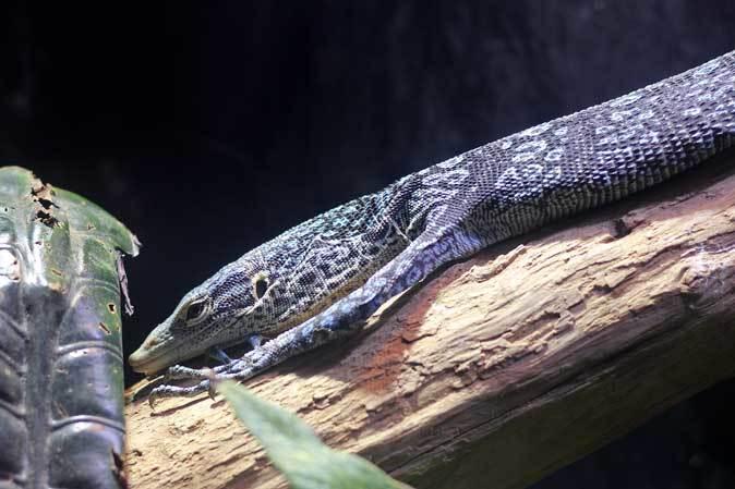アクアパーク品川~アクアジャングルの両生爬虫類 その2_b0355317_20205920.jpg