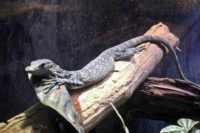アクアパーク品川~アクアジャングルの両生爬虫類 その2_b0355317_20224249.jpg