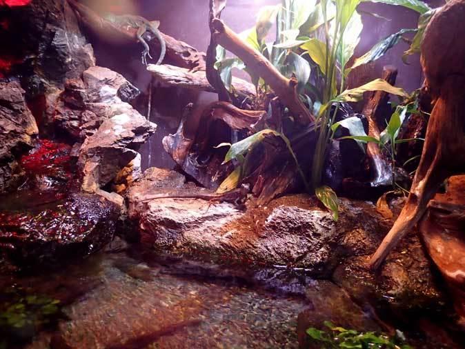 アクアパーク品川~アクアジャングルの両生爬虫類 その2_b0355317_20243652.jpg