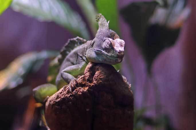 アクアパーク品川~アクアジャングルの両生爬虫類 その2_b0355317_20353360.jpg