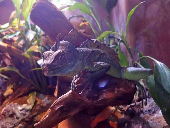 アクアパーク品川~アクアジャングルの両生爬虫類 その2_b0355317_20370105.jpg