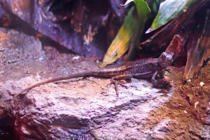 アクアパーク品川~アクアジャングルの両生爬虫類 その2_b0355317_20381282.jpg