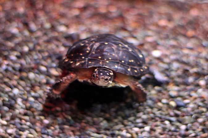 アクアパーク品川~アクアジャングルの両生爬虫類 その2_b0355317_20385097.jpg