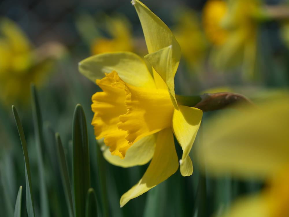 春ですな!_b0408917_11085587.jpg