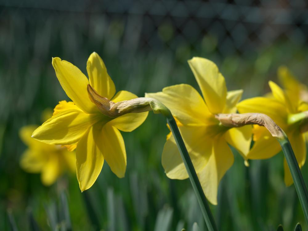春ですな!_b0408917_11091206.jpg