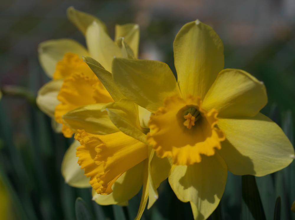 春ですな!_b0408917_11092681.jpg