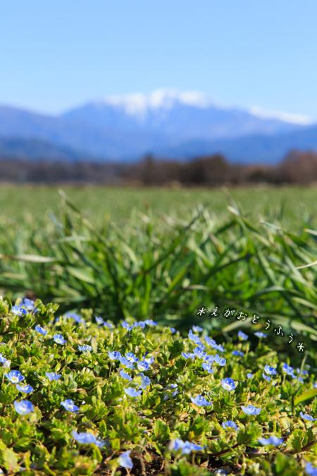 春うらら_f0181018_17250291.jpg