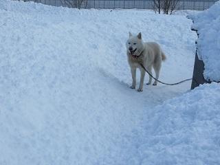 大雪のあと_b0405523_00472878.jpg
