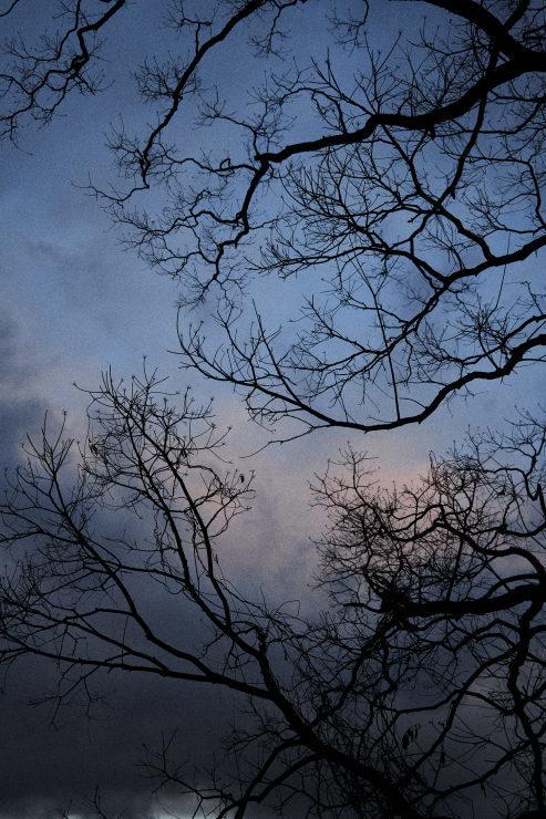evening(4cut)_e0342136_19120523.jpg