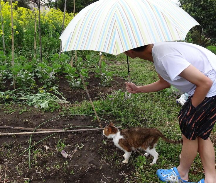 菜ノハナの花咲く畑で_b0060239_13052117.jpg