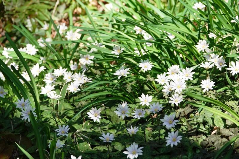神戸市立森林植物園_b0227552_19312450.jpg