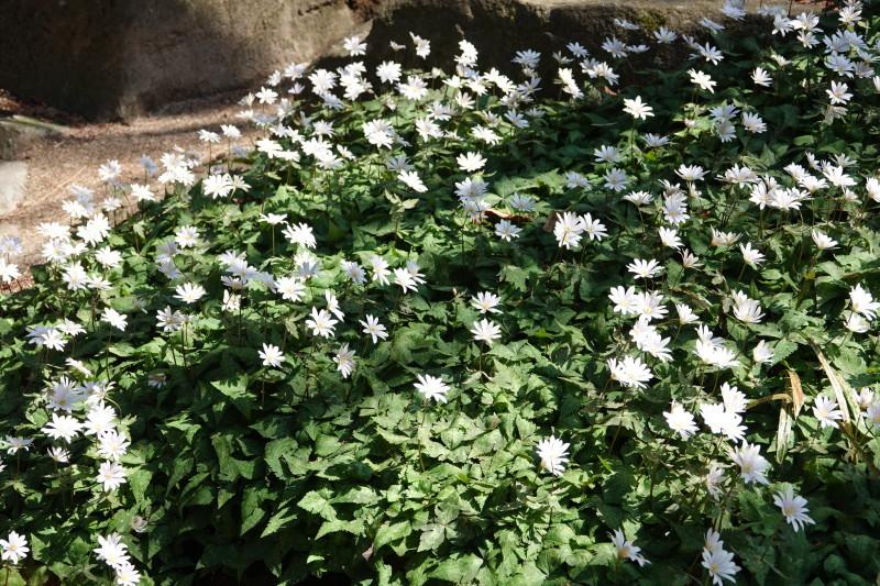 神戸市立森林植物園_b0227552_19340110.jpg