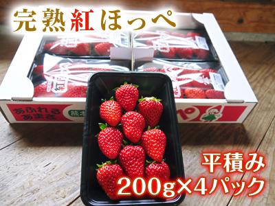 熊本産高級イチゴ『完熟紅ほっぺ』2020年はレギュラーパック3月末発送分、平積みパック4月中旬まで!_a0254656_17234410.jpg