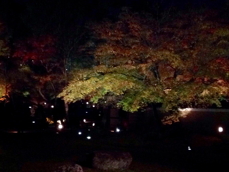 高台寺春のライトアップ_b0153663_00190384.jpeg