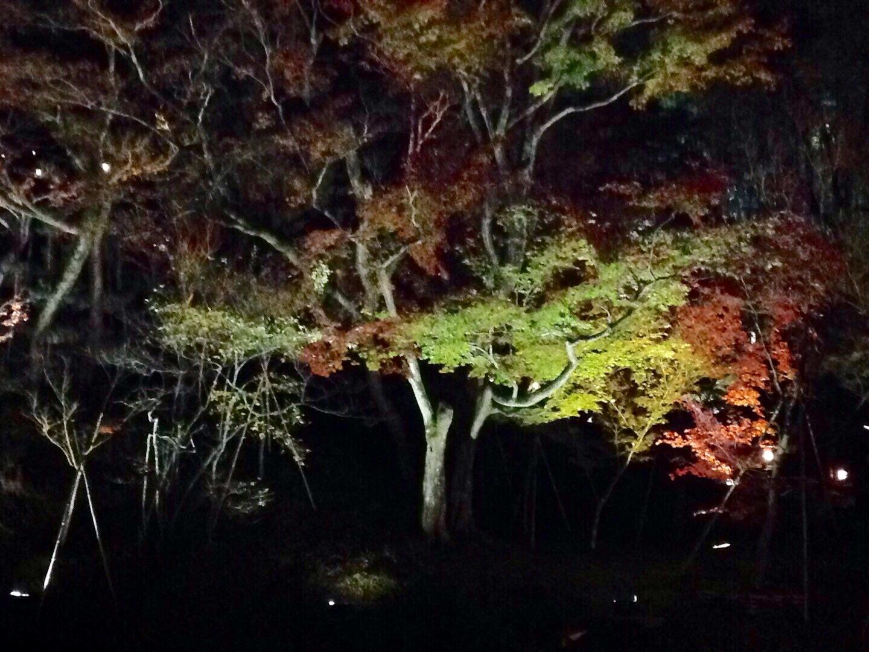 高台寺春のライトアップ_b0153663_00194870.jpeg