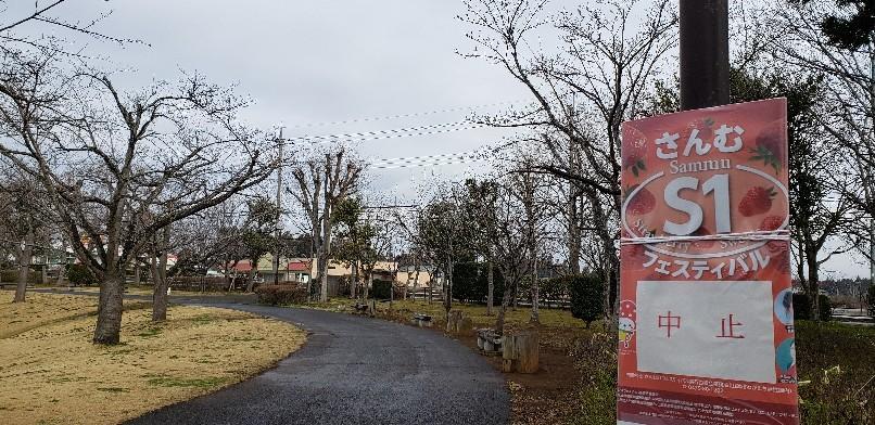 それでも桜は咲く🌸_d0177266_11352958.jpg