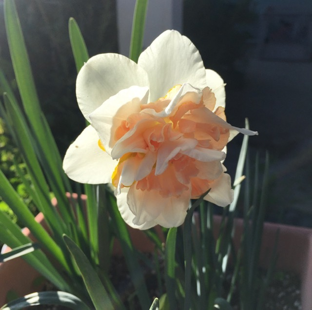 3月の庭_e0350971_09192809.jpg