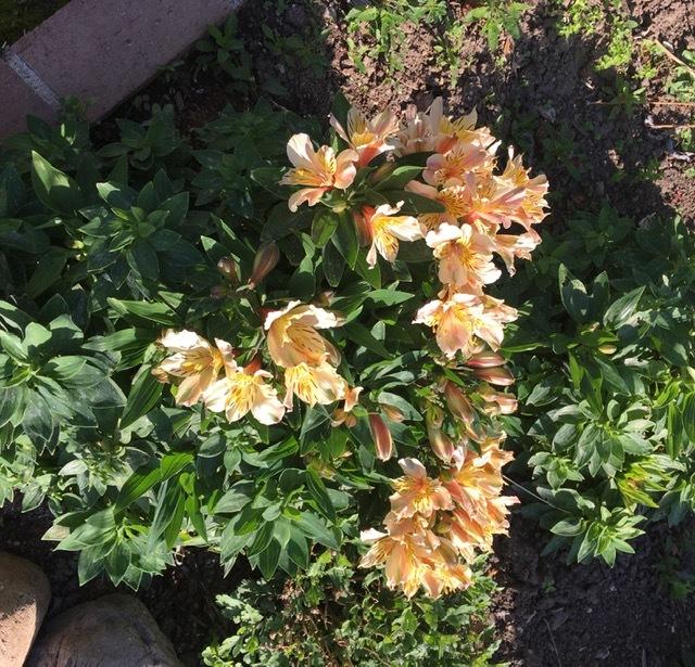 3月の庭_e0350971_09212397.jpg