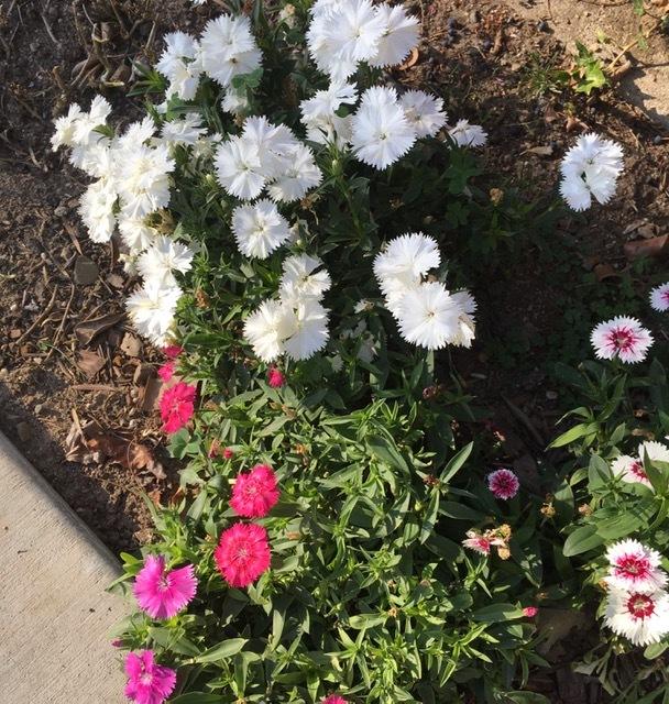 3月の庭_e0350971_09224433.jpg