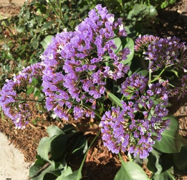 3月の庭_e0350971_09235511.jpg