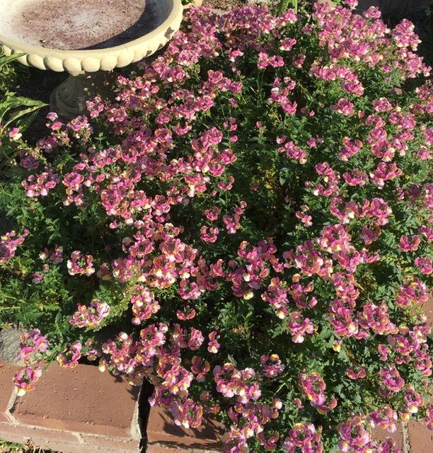 3月の庭_e0350971_09252486.jpg