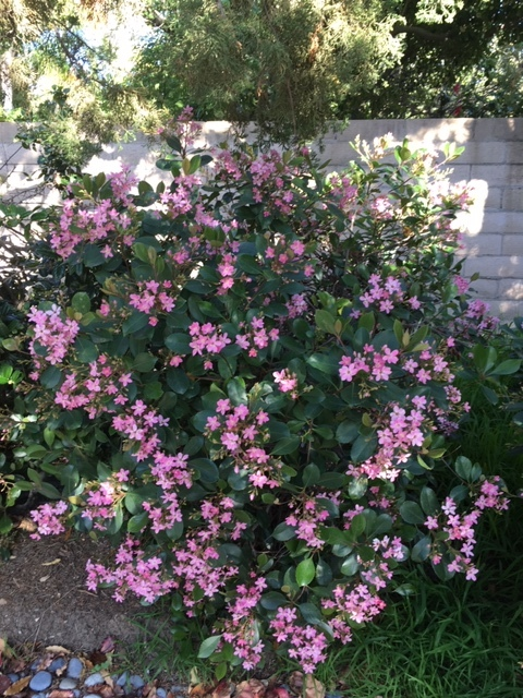 3月の庭_e0350971_09255164.jpg