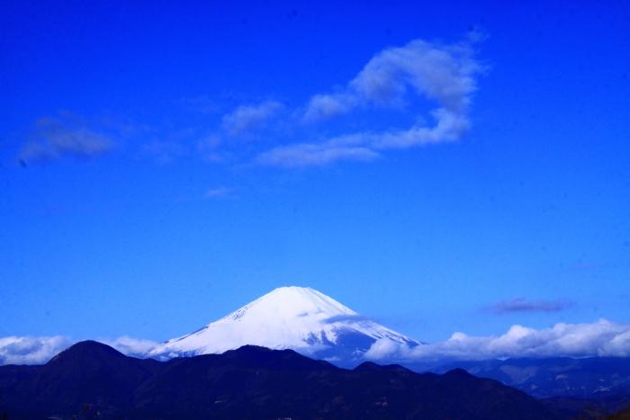 令和2年2月の富士 (28) おおい夢の里の水仙と富士_e0344396_15285322.jpg