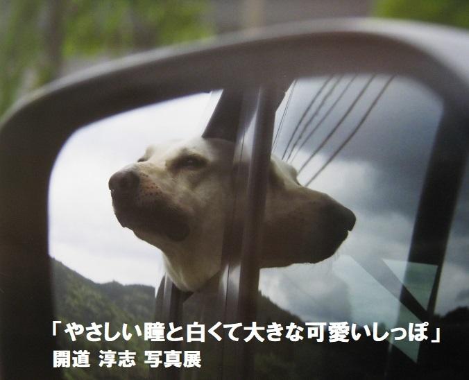 「やさしい瞳と白くて大きな可愛いしっぽ」開道 淳志 写真展 その3_e0134502_11592911.jpg