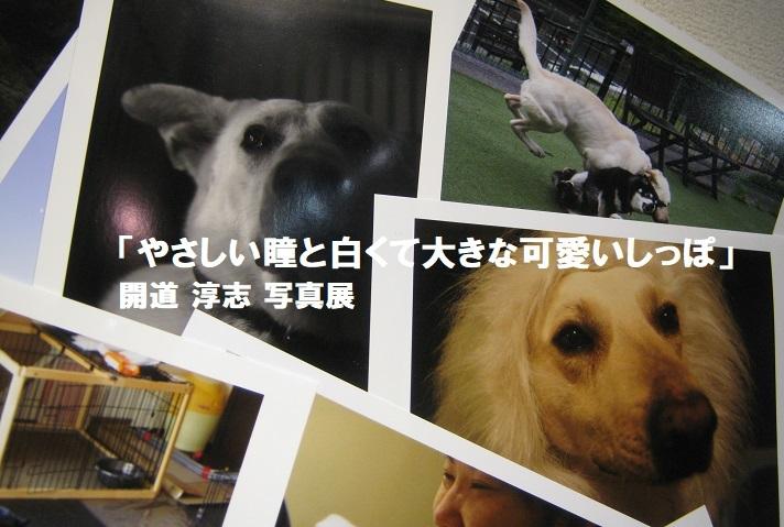 「やさしい瞳と白くて大きな可愛いしっぽ」開道 淳志 写真展 その3_e0134502_12001551.jpg