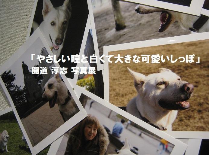 「やさしい瞳と白くて大きな可愛いしっぽ」開道 淳志 写真展 その3_e0134502_12004868.jpg