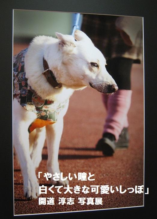 「やさしい瞳と白くて大きな可愛いしっぽ」開道 淳志 写真展 その3_e0134502_12020375.jpg