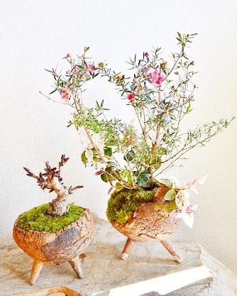 桜・草花盆栽展 vol.8_d0263815_16243530.jpg