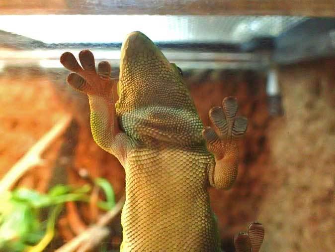 アクアパーク品川~アクアジャングルの両生爬虫類 その3_b0355317_21503319.jpg