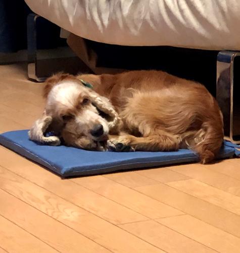 保護犬を迎えるという事_b0046520_15520553.png