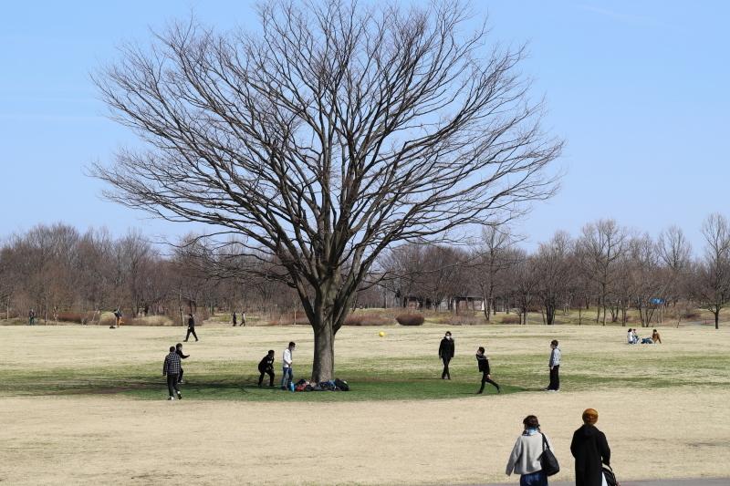 樹に集う_e0169421_17111717.jpg