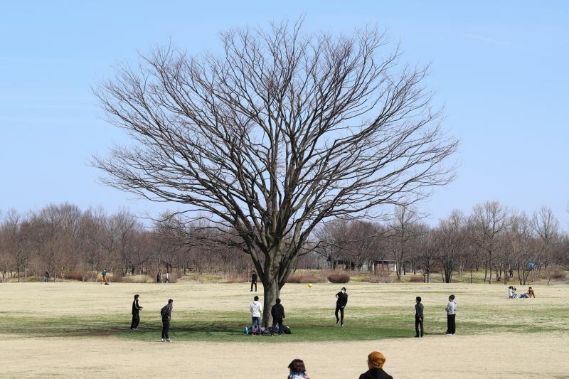 樹に集う_e0169421_17111741.jpg