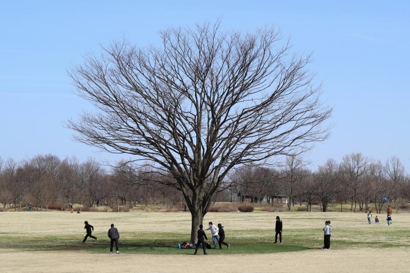 樹に集う_e0169421_17111839.jpg