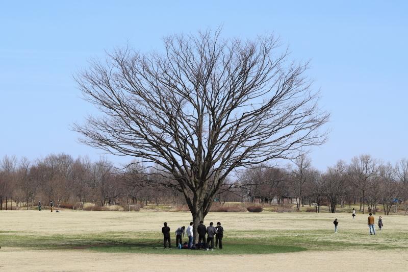 樹に集う_e0169421_17111906.jpg